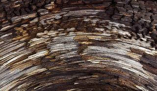 Driftwood Mandala