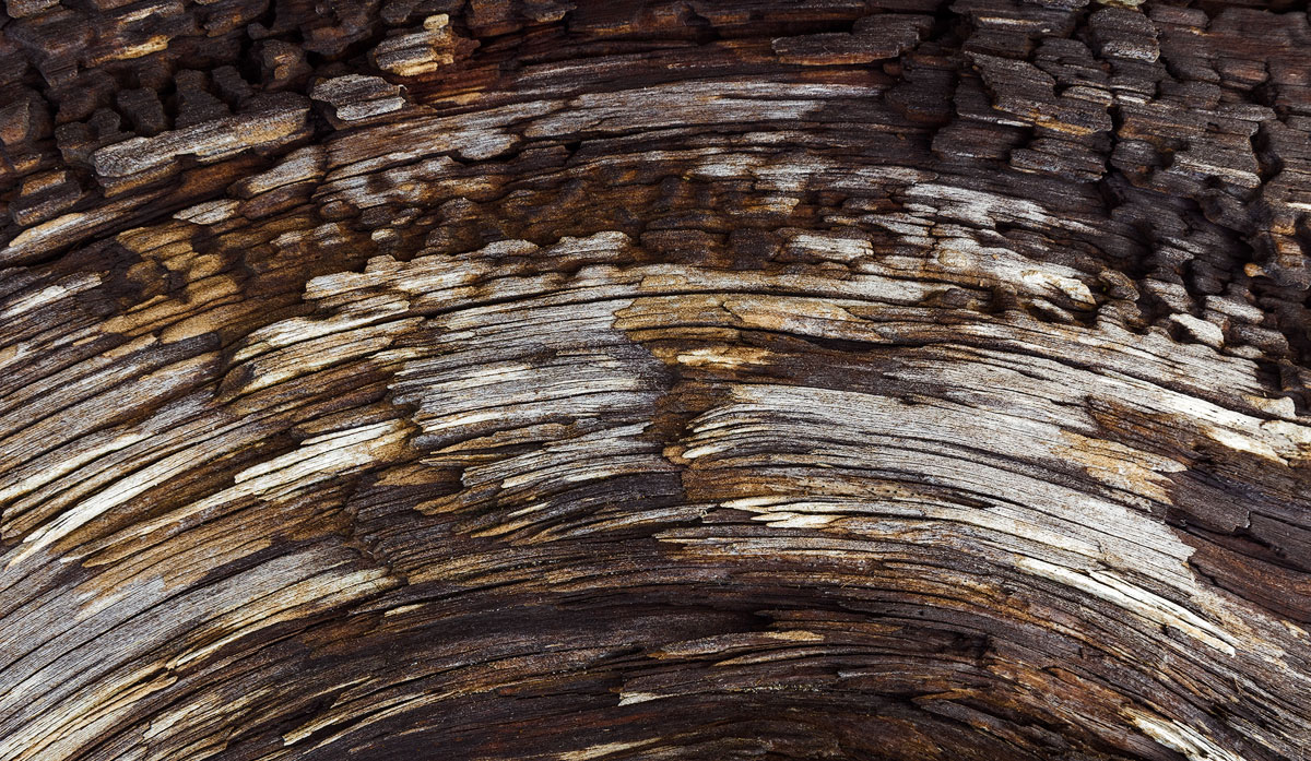 A pattern on driftwood that reminded me of a semi circle mandala